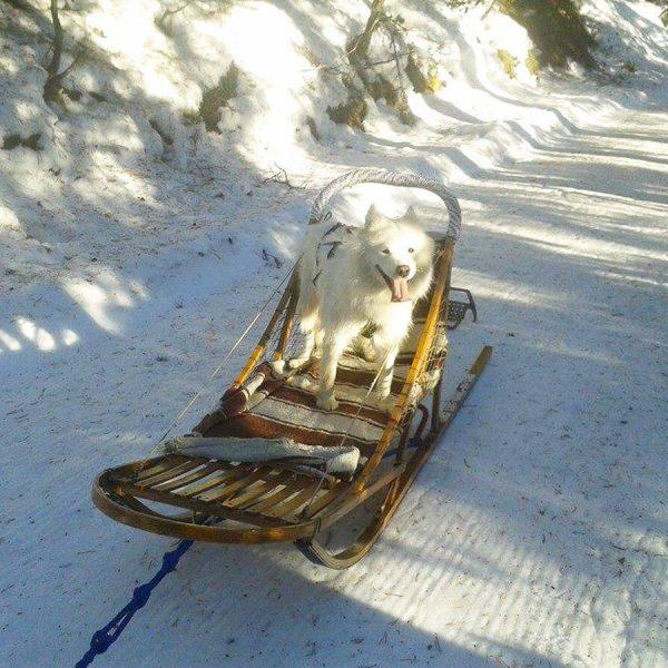 balade en chiens de traîneaux à la Quillane