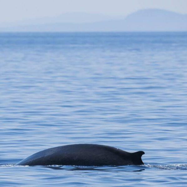 croisière à la rencontre du grand dauphin