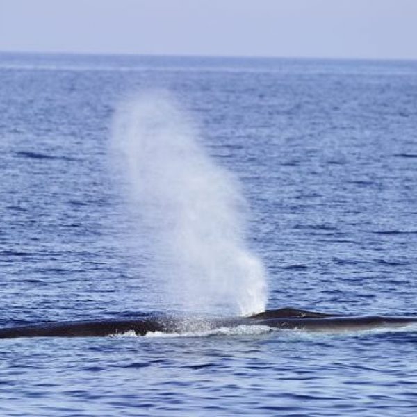 croisière baleines et dauphins