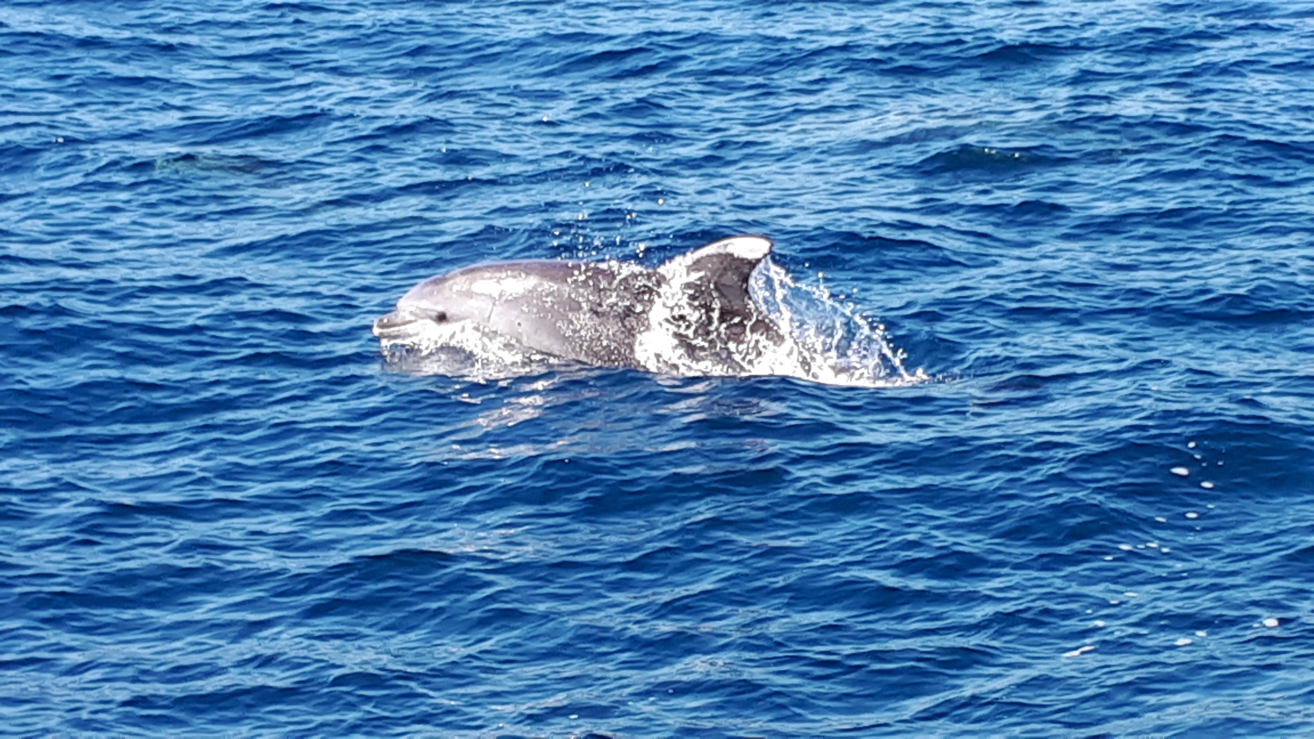 Croisière en mer à la rencontre du grand dauphin