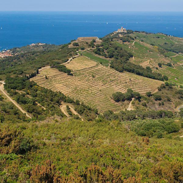 Trottinette électrique tout terrain Collioure